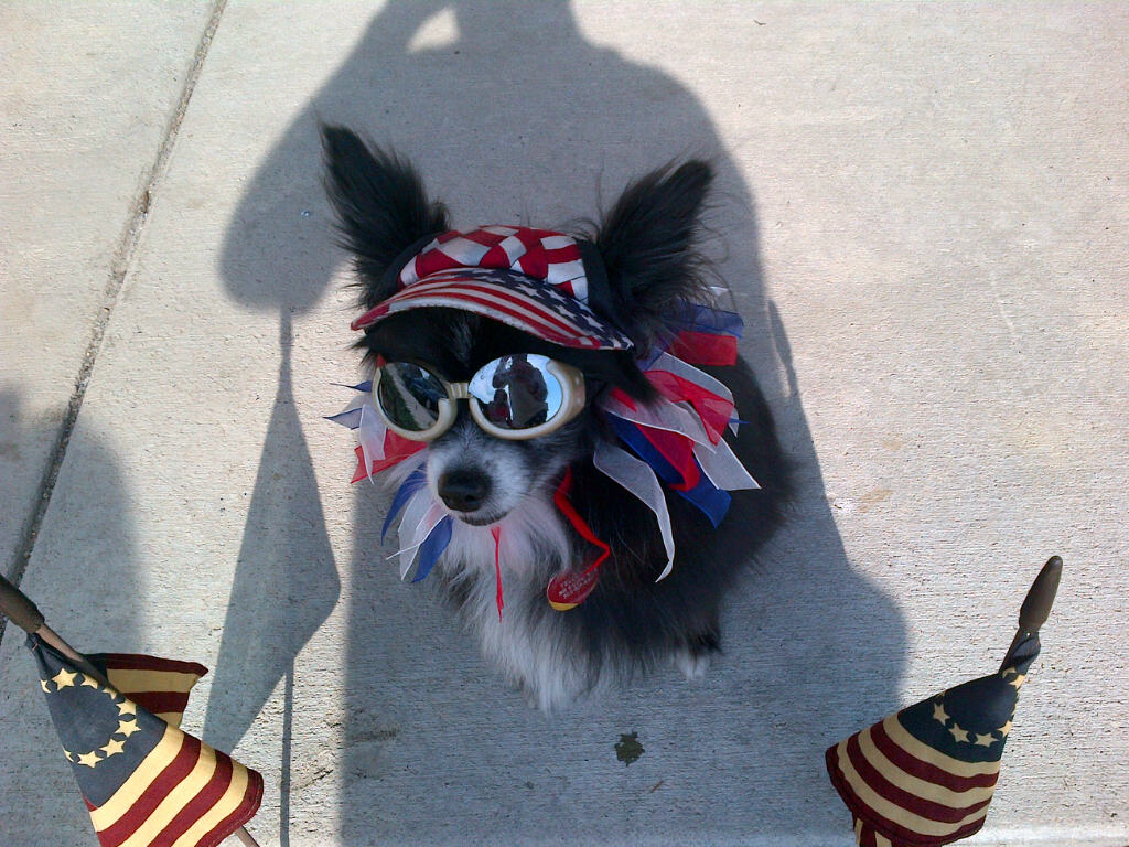 Telluride on his way to the Fourth of July parade. Submitted by: Robin Lucy