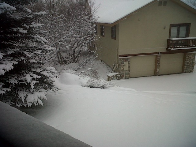 Visiting Steamboat outside my door. Submitted by: Lauren Bieder