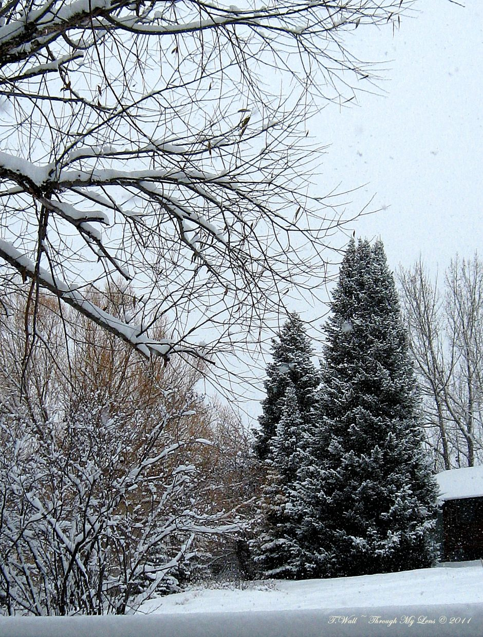 Taken on Manitou Avenue in Fairview. Submitted by: Teri Wall