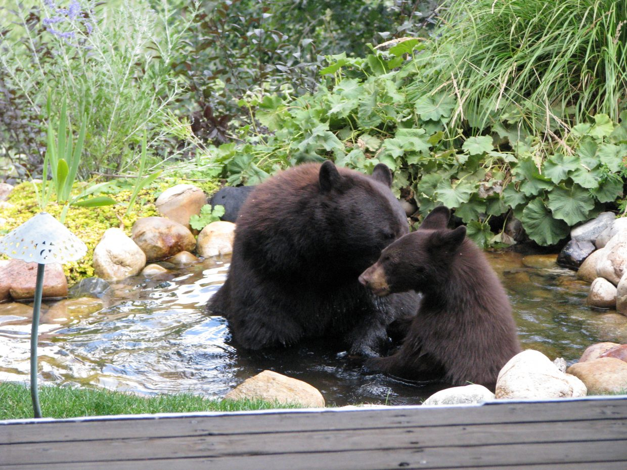 Momma and cub in pond off my deck. Submitted by: Josie Fratus