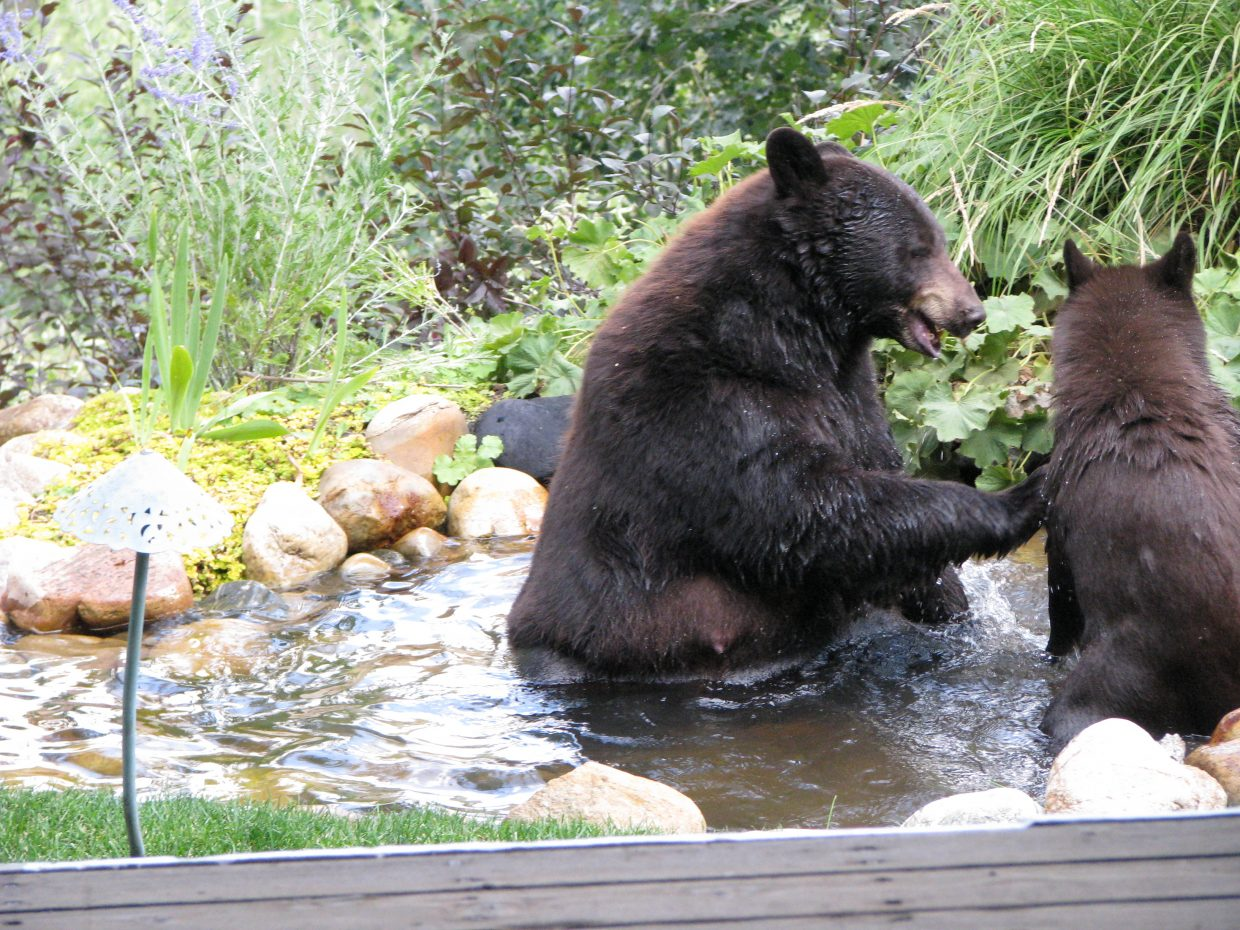 Momma and cub fighting. Submitted by: Josie Fratus