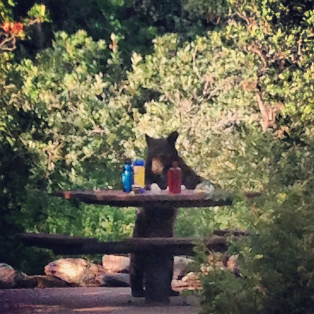 My cousin Meredith Sny took this last night. We went to Fish Creek Falls for a picnic and this bear stole our dinner! Submitted by: Jenni DeFouw