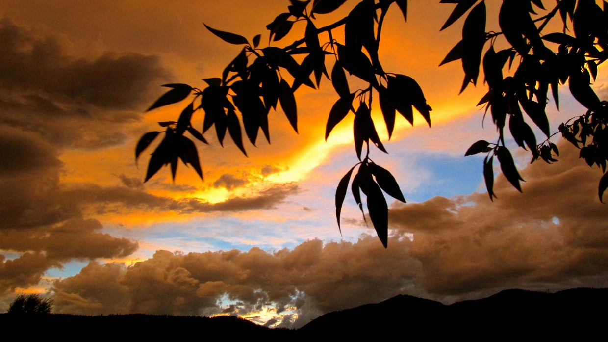 Cottonwood silhouette. Submitted by: Ryan Lohan