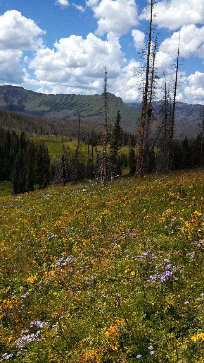 Skinny Fish Lake hike in Flat Tops. Submitted by: Tom Simmins