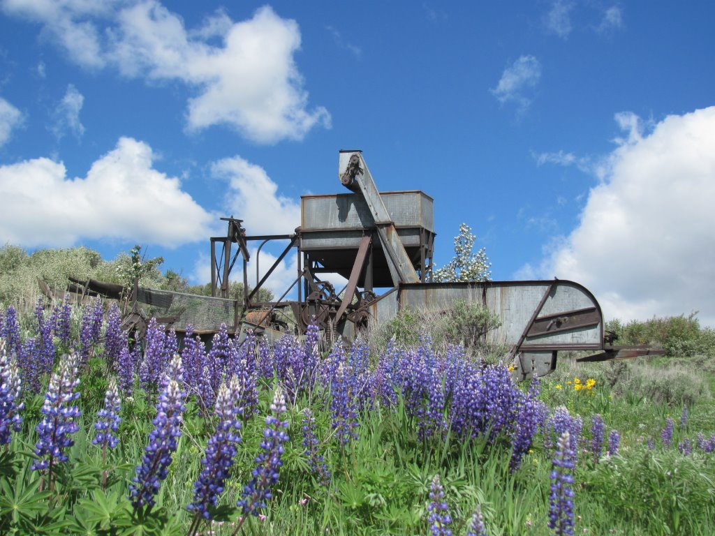 The Gleaner Nine is an antique combine (pulled behind a tractor) to harvest the wheat. Submitted by: Annette Zuber