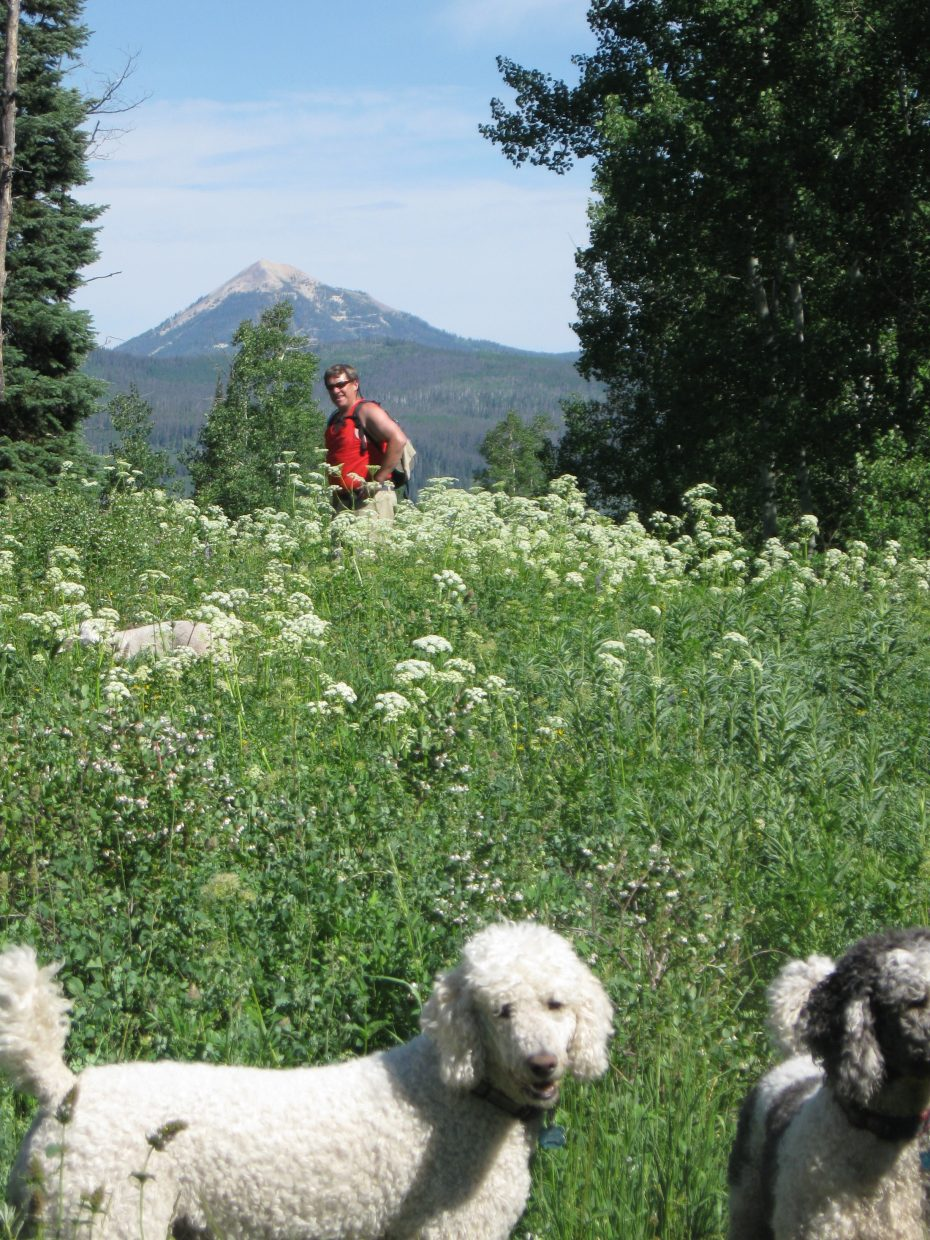 Hiking in North Routt with the dogs. Submitted by: Sue Hansen