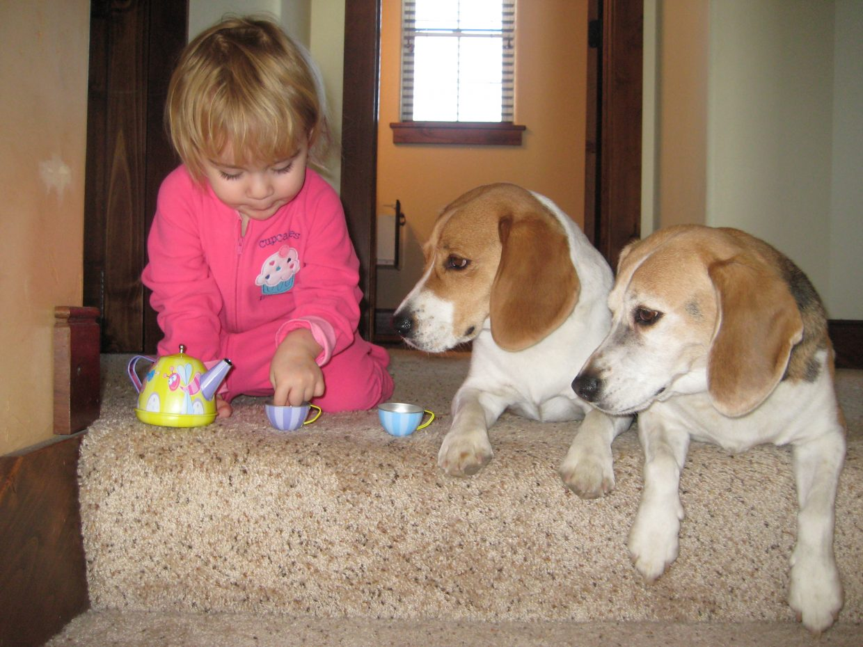 Harlo, 2, having a tea party with her beagle friends Max and Bagel. Submitted by: Erica Adams