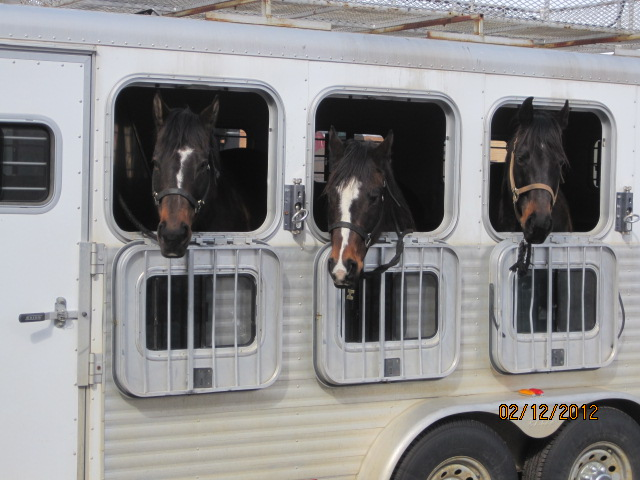 Horses waiting for their turn during the Winter Carnival. Submitted by: Curt Merchant
