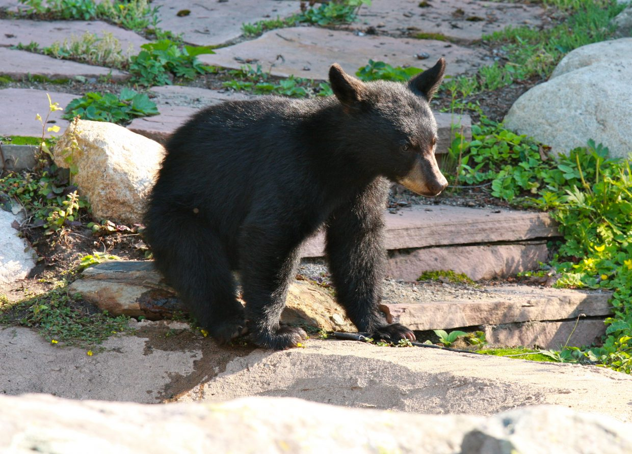 Baby bear. Submitted by: Kristi Brown