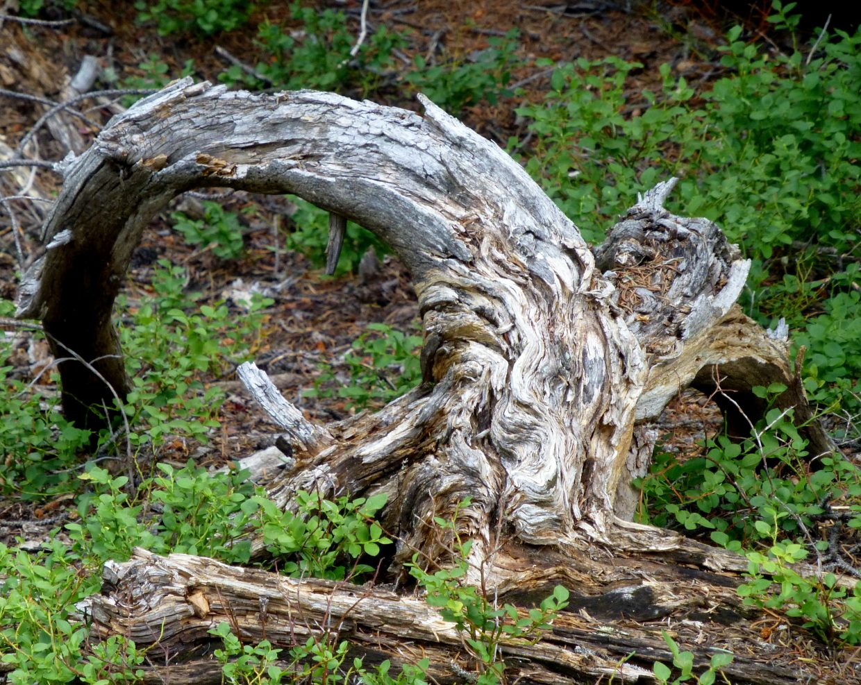 Interesting stump. Submitted by: Gail Hanley