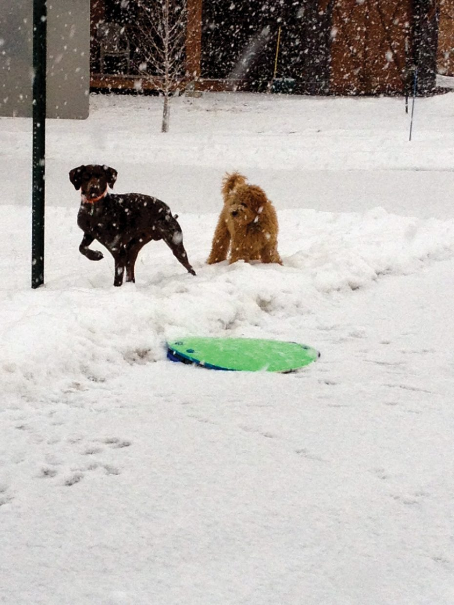 Are these dogs going to go sledding? Photo submitted by Amy Johnson