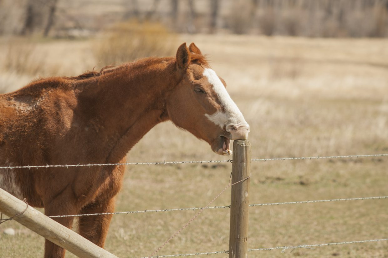 A decent horse needs a decent toothpick. Submitted by Karl Gerber