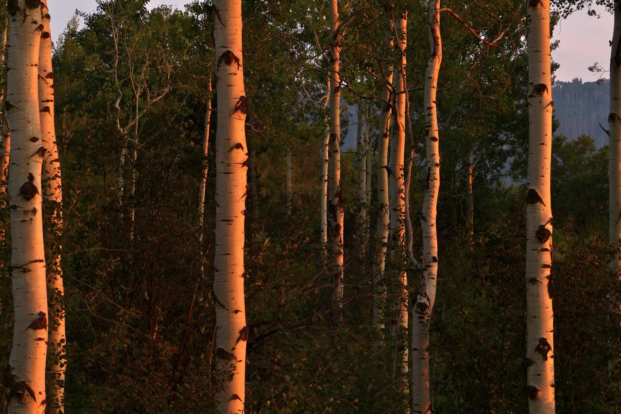 Shots taken from Pattie Moon's front porch as the sun sets on a smoky valley Aug. 3. Submitted by: Marie-Beth Cheezem