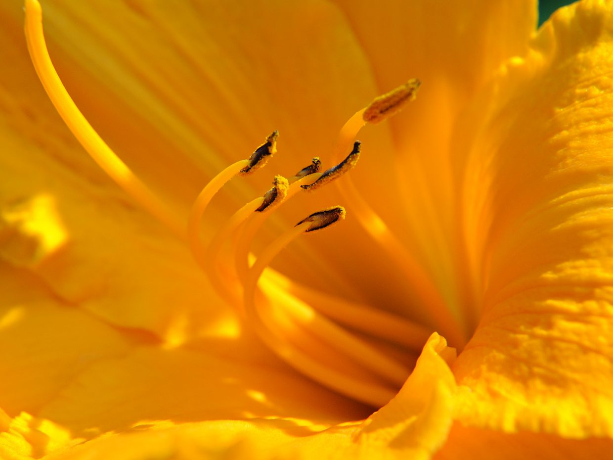 Lily, Yampa River Botanic Park. Submitted by: Jeff Hall