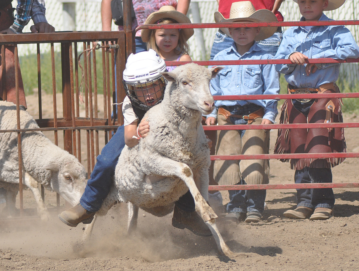 Lukas Znamenacek mutton bustin' at the 2012 Routt County Fair. Submitted by: Wendy Lind