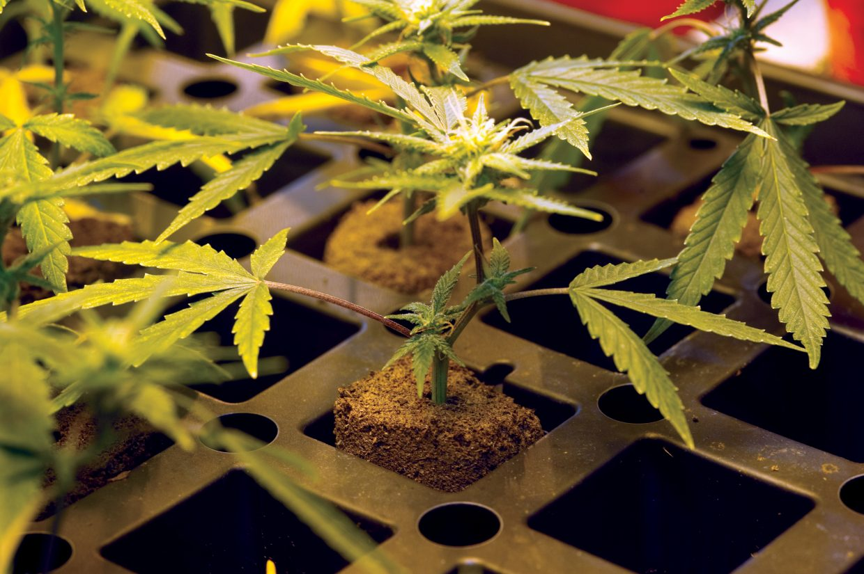 The Hayden Town Council passed an ordinance Thursday allowing recreational marijuana in the town and creating an application process for people to open dispensaries in city limits.