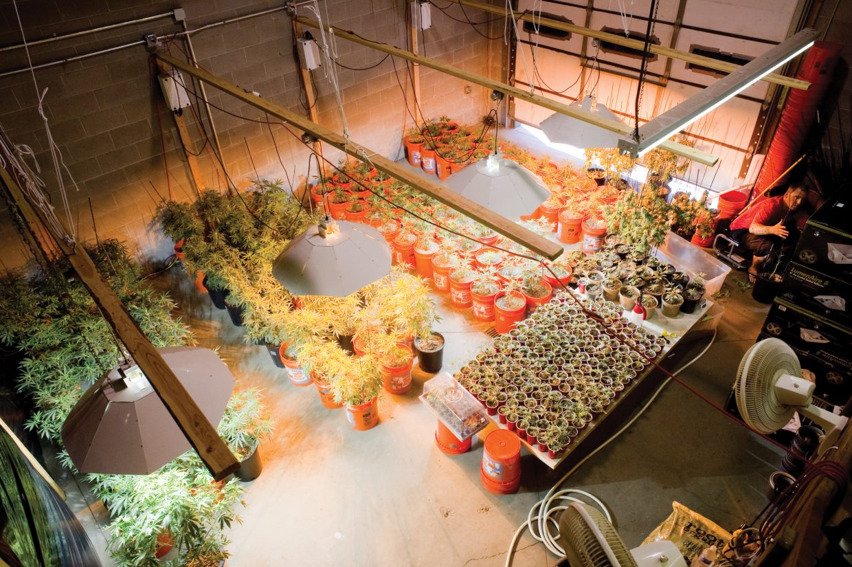 An overview of the grow operation at Rocky Mountain Remedies shows plants at different stages of development.