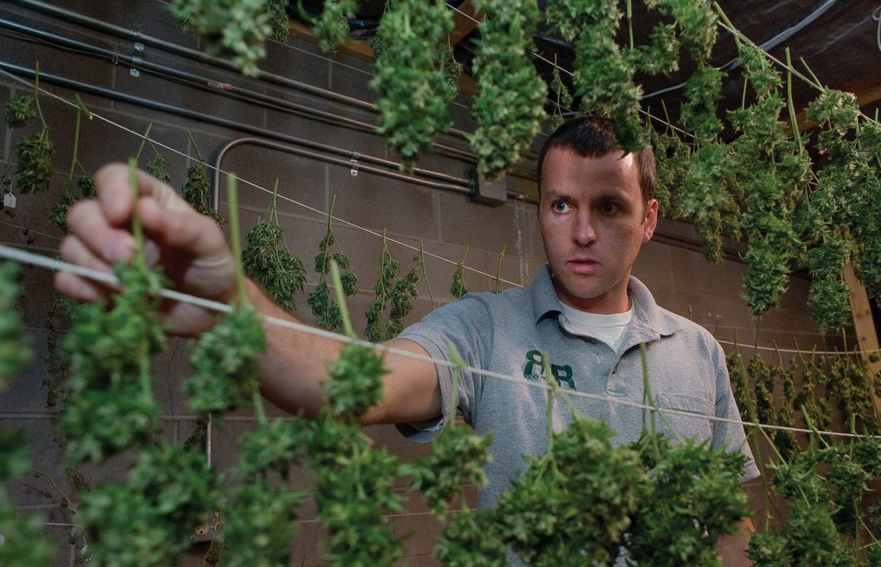 Ryan Fisher, one of the owners of Rocky Mountain Remedies in Steamboat Springs, hangs marijuana buds to dry in September 2017.