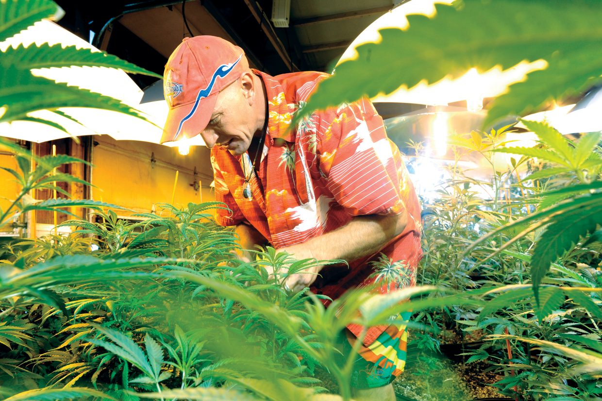 Chris Ward, owner of Aloha's, tends to the plants inside the grow house at his center in Milner. Ward said his business is not yet profitable.