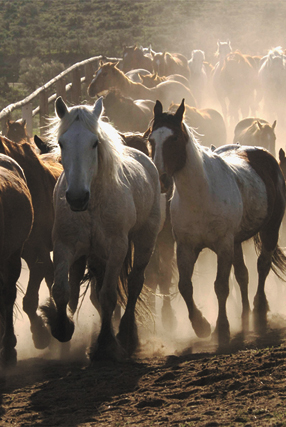 Local photographer Judy Jones spent three years following mustangs to capture images like this. A show of those photos and other artwork opens with a reception from 5 to 8 p.m. Friday at Artists' Gallery of Steamboat.