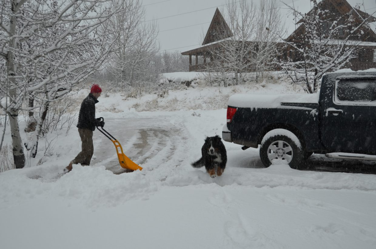 Sweetie, the Bernese Mountain dog, loves the snow that is falling in Steamboat. Submitted by: Shannon Lukens