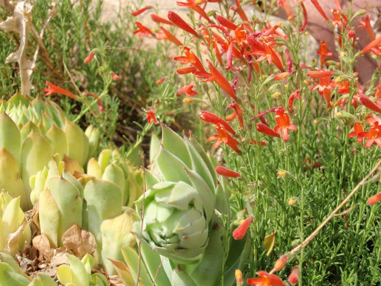 Succulents and lil orange beauties. Submitted by: Candice Martin