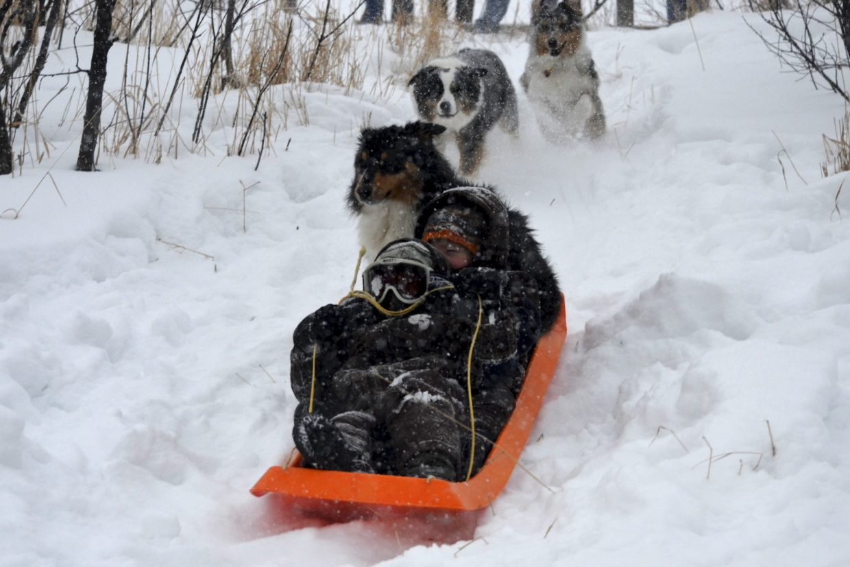 Jeff and Alston Adams, of Dog Patch Ranch, sledding with their dog, Maggie, aboard. Submitted by: Penney Adams
