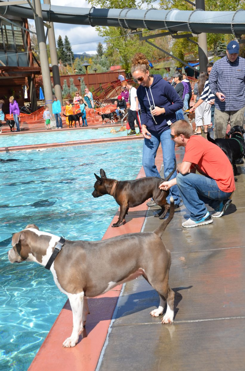 Dogs wait to jump in the Old Town Hot Springs pool during the Poochy Paddle event. Photo: Shannon Lukens