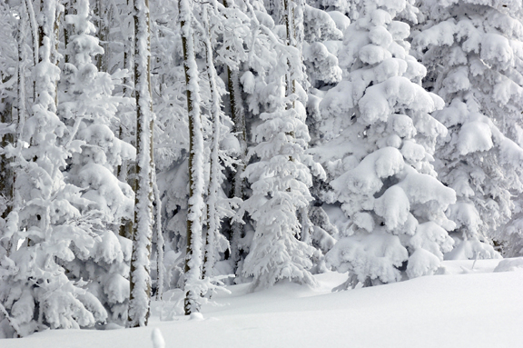 Frosted trees and fresh powder dominated the landscape Friday at the ski area. Thursday's snow is expected to give way to partly sunny skies over the weekend.