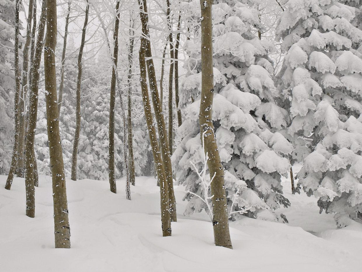 It was a powder day in Steamboat on Feb. 13. Submitted by: Jeff Hall
