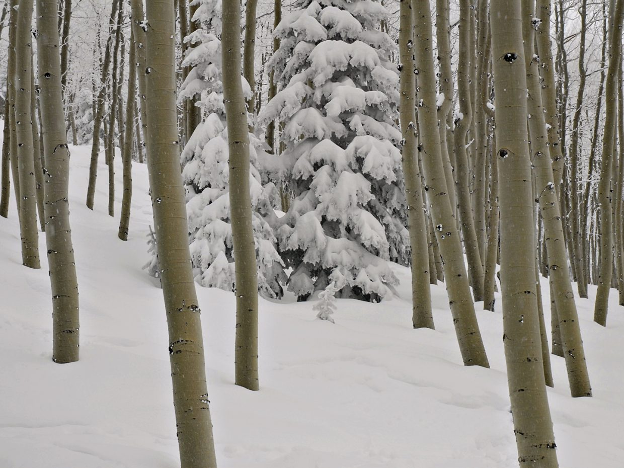 Powder shot of trees at Steamboat Ski Area. Submitted by: Jeff Hall