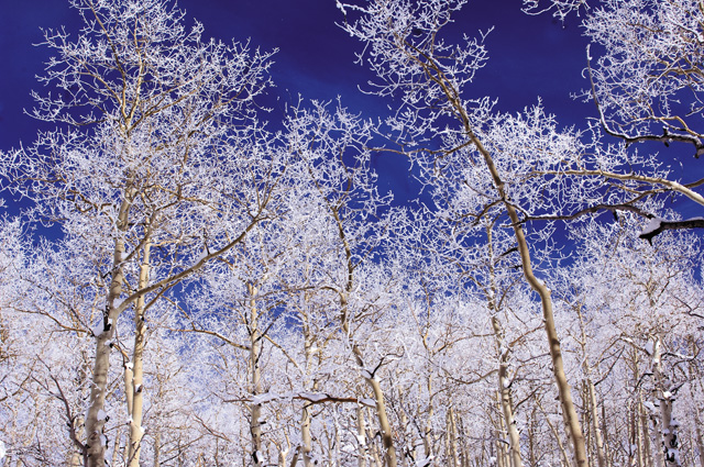 Deep blue sky and aspen trees coated in white snow are typical sights on a Steamboat Powdercats trip. So are deep powder and challenging runs led by some of the top guides in Steamboat Springs.