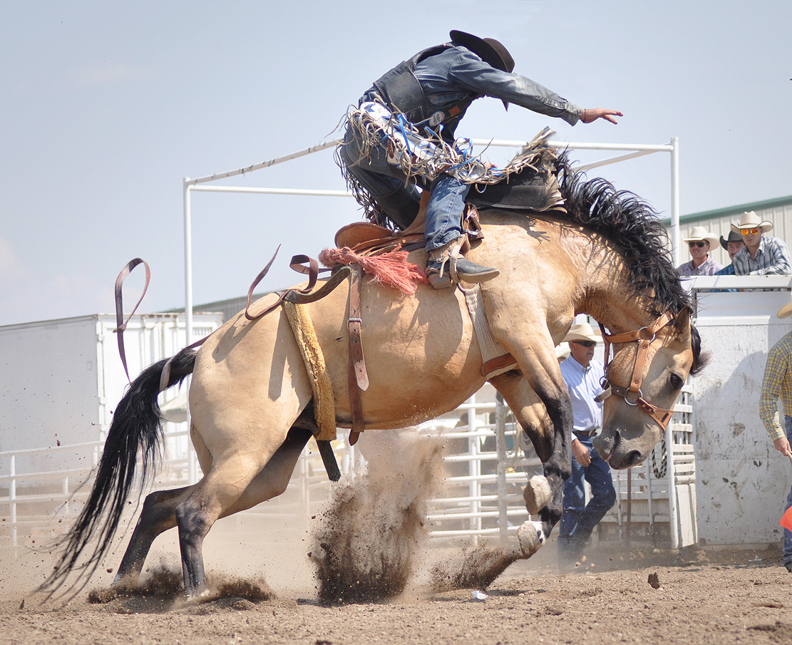 A competitor rides in the Rocky Mountain Bronc Riders Association Season Finals at the 2012 Routt County Fair in Hayden. Submitted by: Wendy Lind