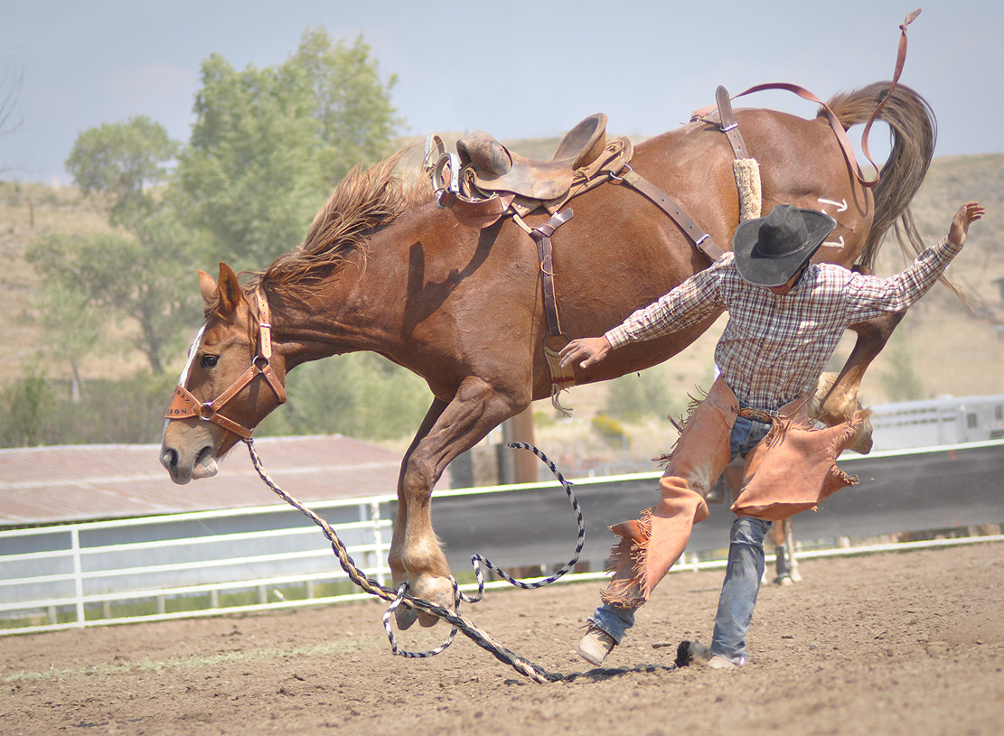 A competitor dismounts in the 2012 Rocky Mountain Bronc Riders Association Season Finals at the 2012 Routt County Fair in Hayden. Submitted by: Wendy Lind