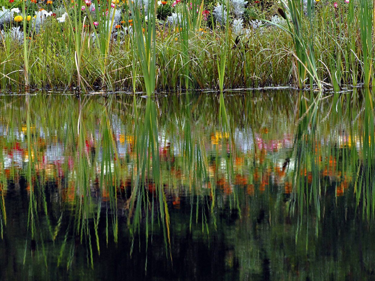 Reflections on a flower bed at Yampa River Botanic Park. Submitted by: Jeff Hall