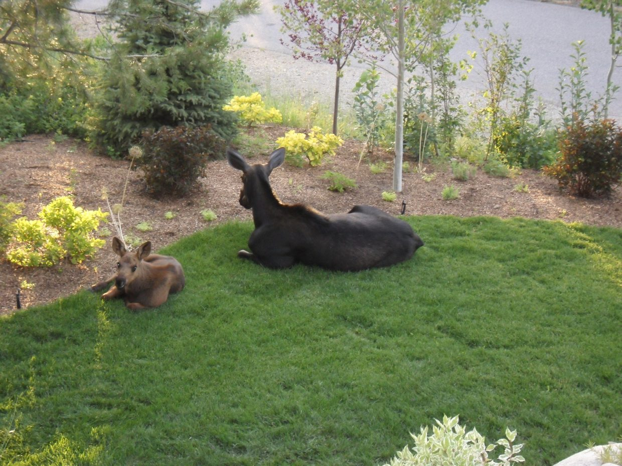 Mom and baby bedded down for the night in the Sanctuary. Submitted by: Susan Wetzler