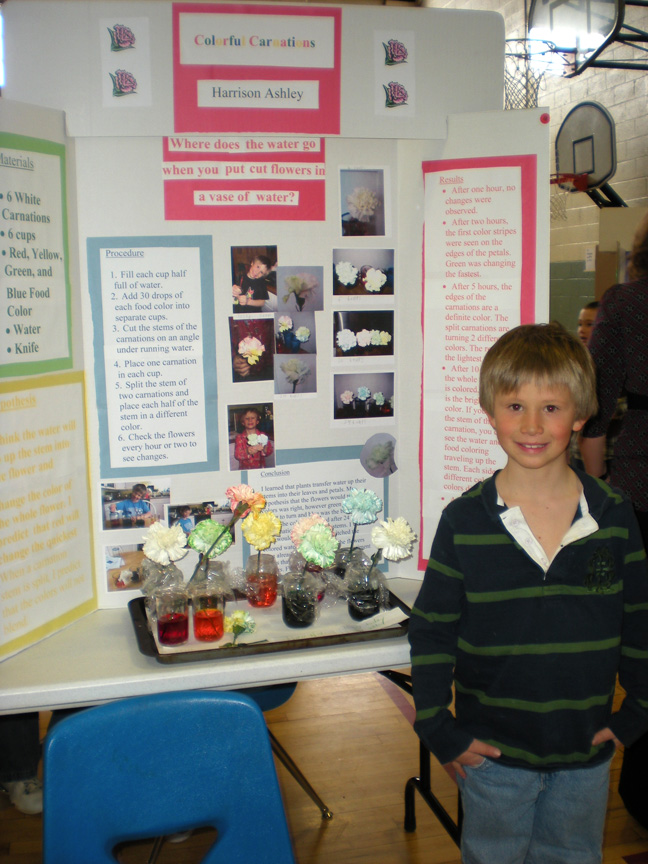 Third-grader Harrison Ashley chose a colorful topic for his science fair project - carnations.