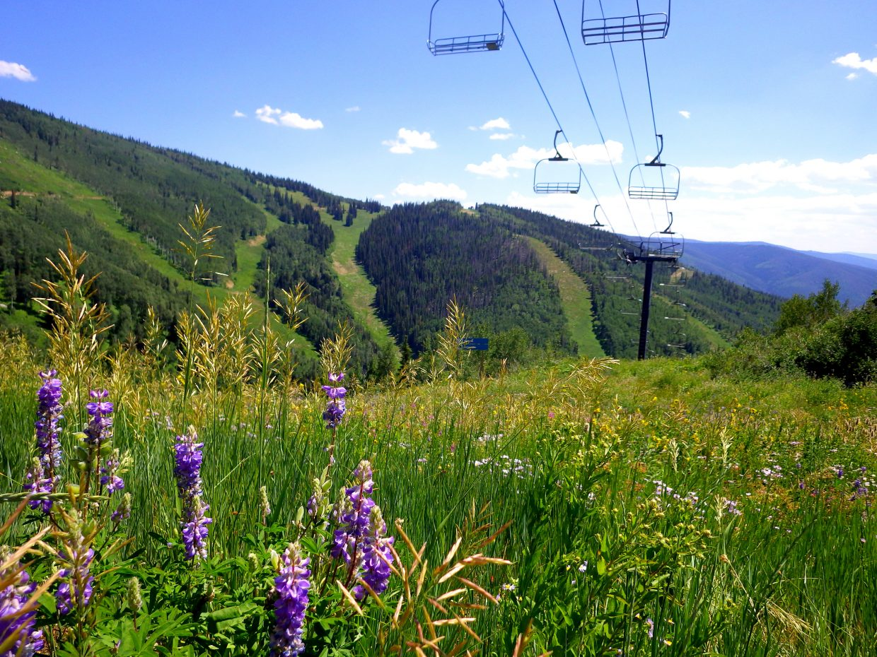 We hiked around Mt. Werner at Steamboat Ski Area today, doing some geocaching. I took a few pictures of the wildflowers. Submitted by: Shannon Lukens