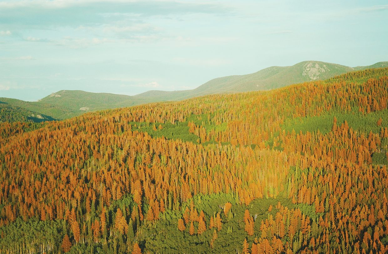 The U.S. Forest Service is proposing a fuels reduction project to mitigate wildfire risk across 3,000 acres in North Routt. Patches of dead lodgepole pines, pictured here in 2017, have since turned grey and are falling at increasing rates, posing an additional threat to residents and visitors on surrounding trails and roads.
