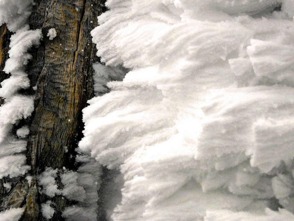 Snow crusted trunk. Submitted by: Jeff Hall