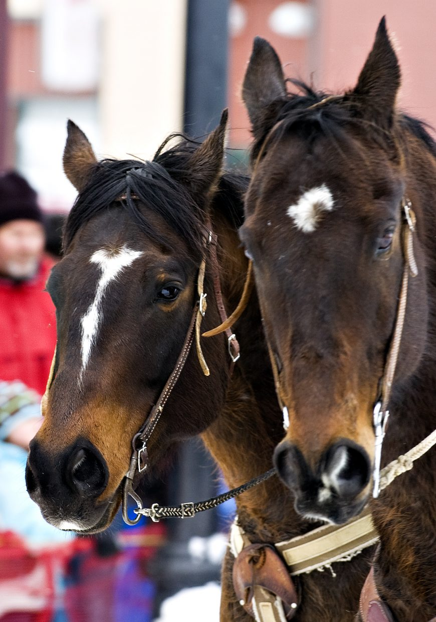 Two horses get a break from the action during the 95th annual Winter Carnival on Lincoln Avenue in Steamboat Springs on Saturday morning.