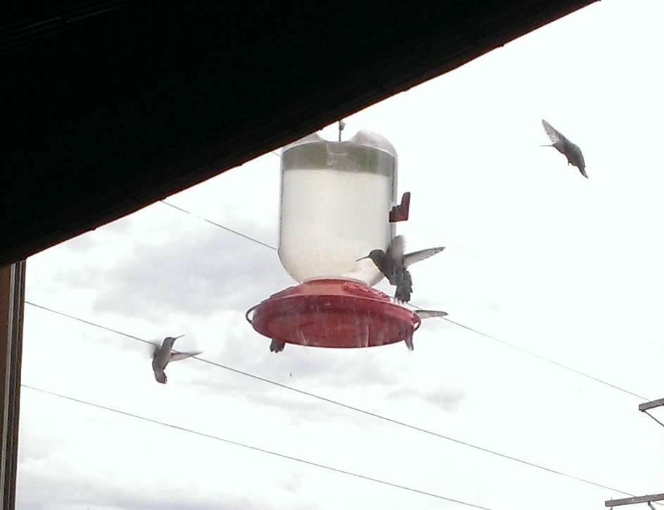 Hummingbird frenzy. Submitted by: Erin Will Torello