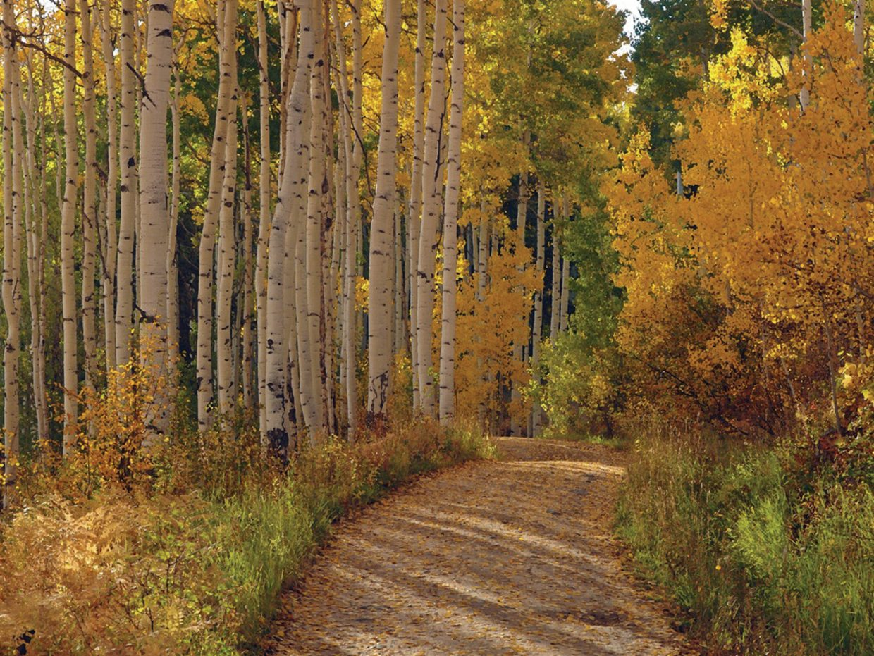 Fall colors by Rod Hanna; the artist's photographs are featured in September at Wild Horse Gallery. The gallery hosts a reception for featured artists from 5 to 8 p.m. today as part of First Friday Artwalk.
