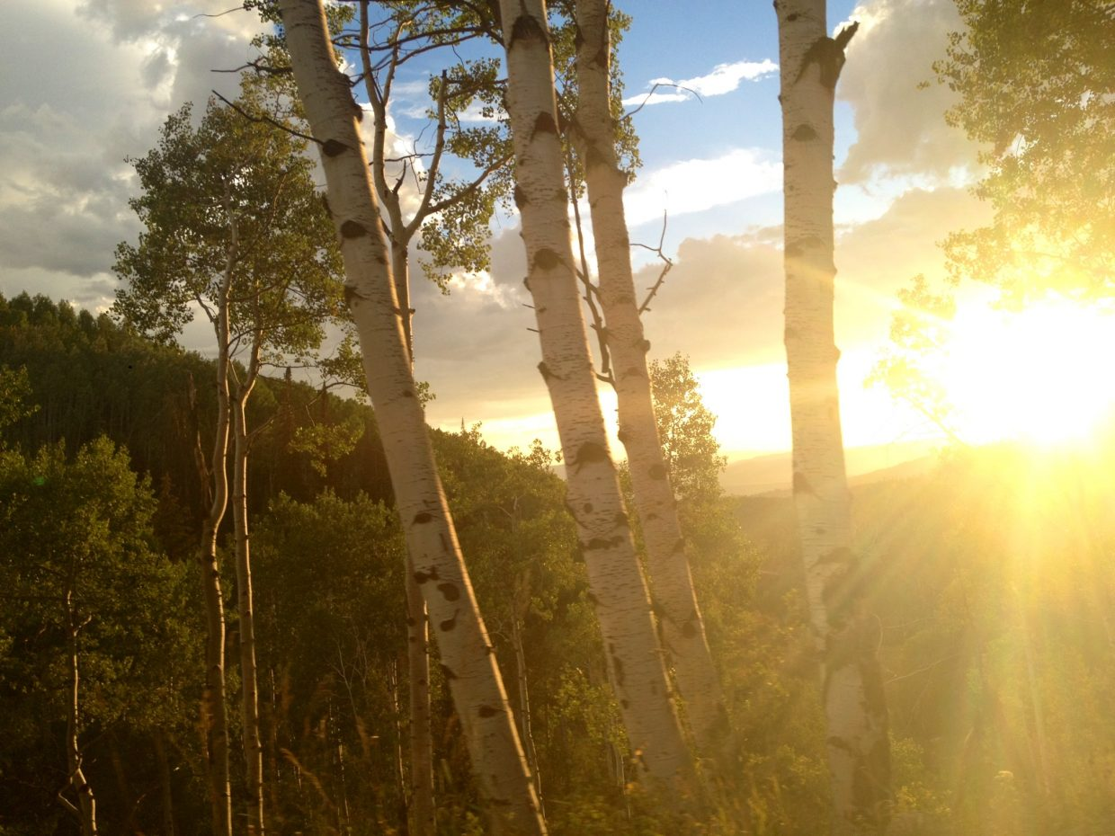 Sunset through the aspens on Buff Pass. Submitted by: Alyssa Retzena