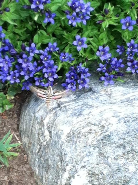 A bug at Yampa River Botanic Gardens. Submitted by: Heidi Boettcher