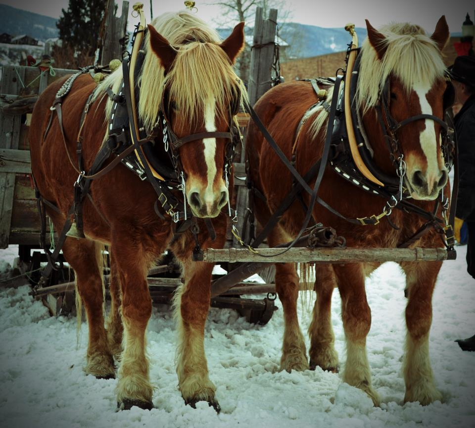 99th annual Winter Carnival in Steamboat Springs. Submitted by: Amy Johnson