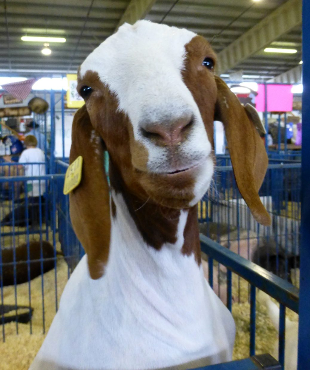 Routt County Fair. Submitted by: Gail Hanley