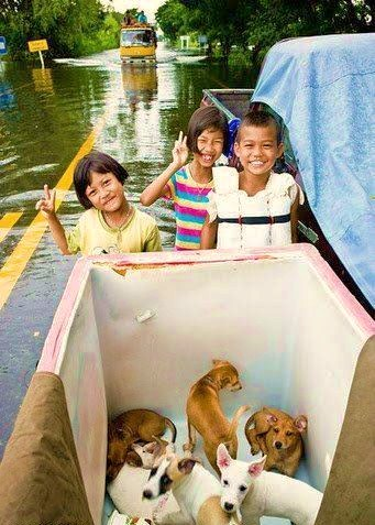 Kids rescuing dogs and puppies during a recent flood in Thailand.