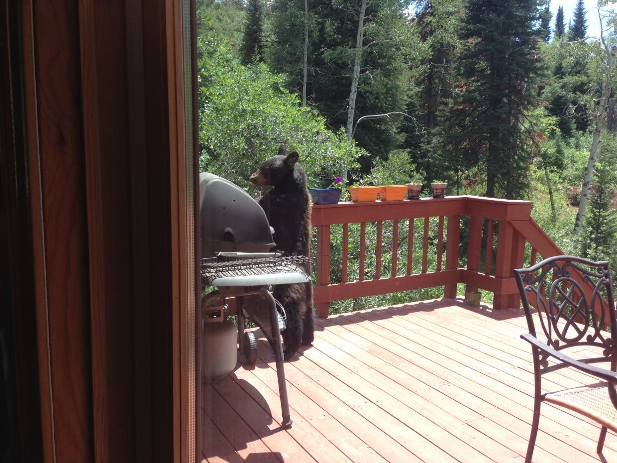 Bear grillin'. Submitted by: Buddy Kinder