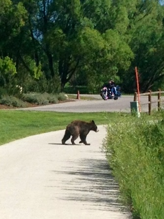 Little cub on the Yampa River Core Trail by the Division of Wildlife building. Submitted by: Ben Jones